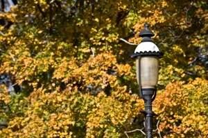 fall_scenics